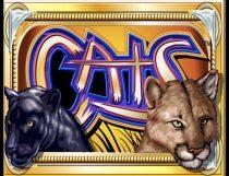 سلوتس القطط Cats Slot Slot - Photo