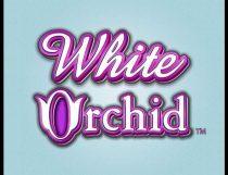 سلوتس السحلبية البيضاء White Orchid Slot - Photo