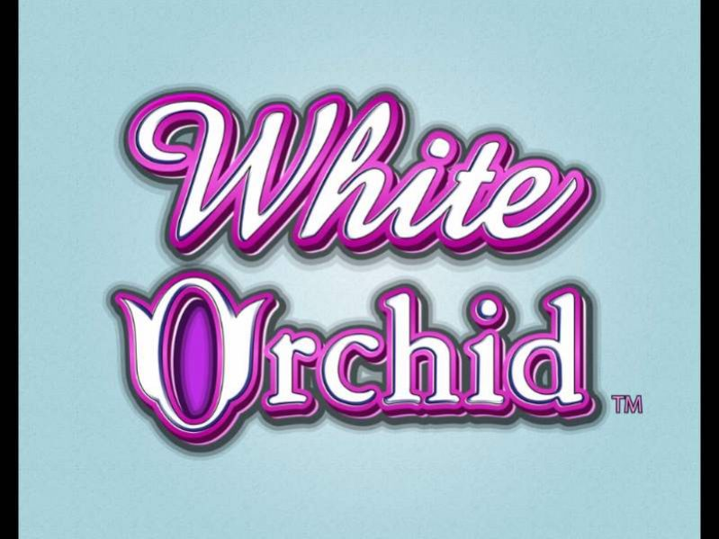 White Orchid سلوت