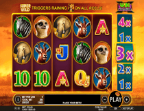 هوت سافاري  Hot Safari Slot - Photo