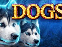 لعبة سلوتس الكلابDogs slot Slot - Photo