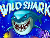 القرش الجامح Wild Shark Slot - Photo